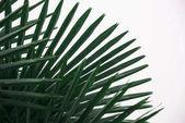 Fotografia foglie di Palma verde nel concetto di arte per la progettazione di interni tappezzeria