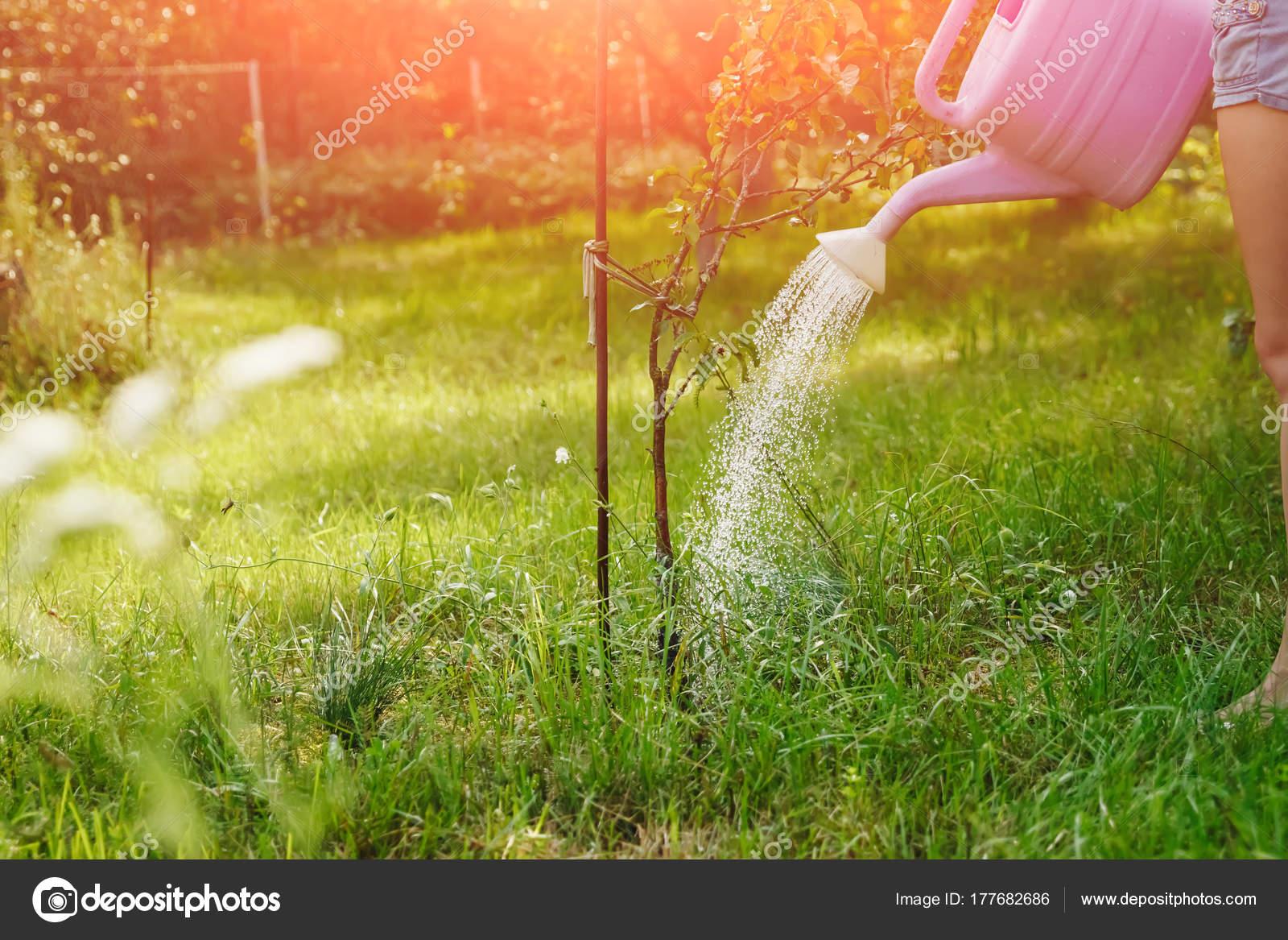 Girl Watering Violet Apple Tree Green Garden Close Copy