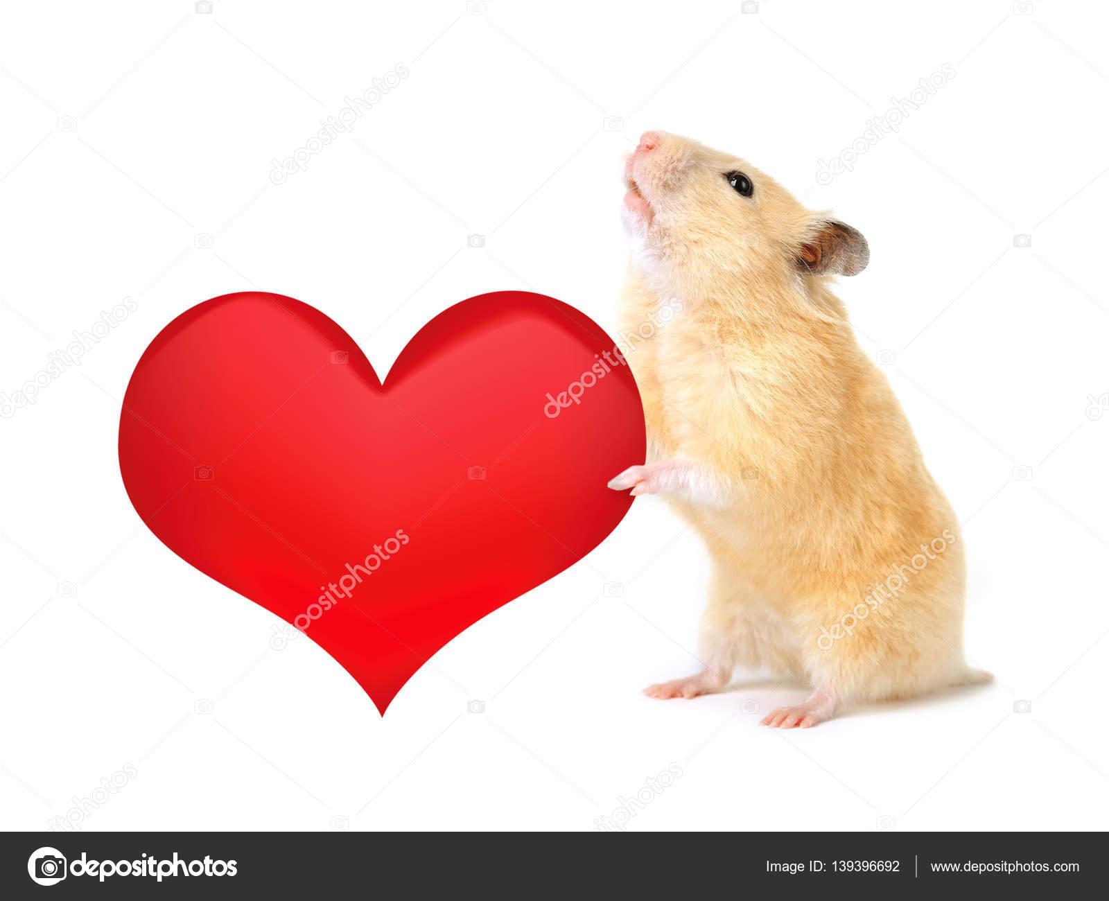хомяк с сердцем картинка открывает перед