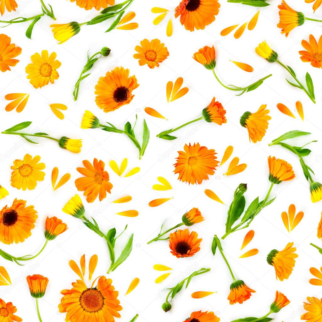 Seamless pattern with flowers marigold isolated on white backgro