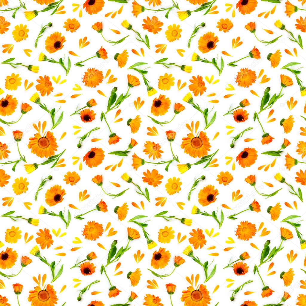 Seamless pattern with flowers calendula