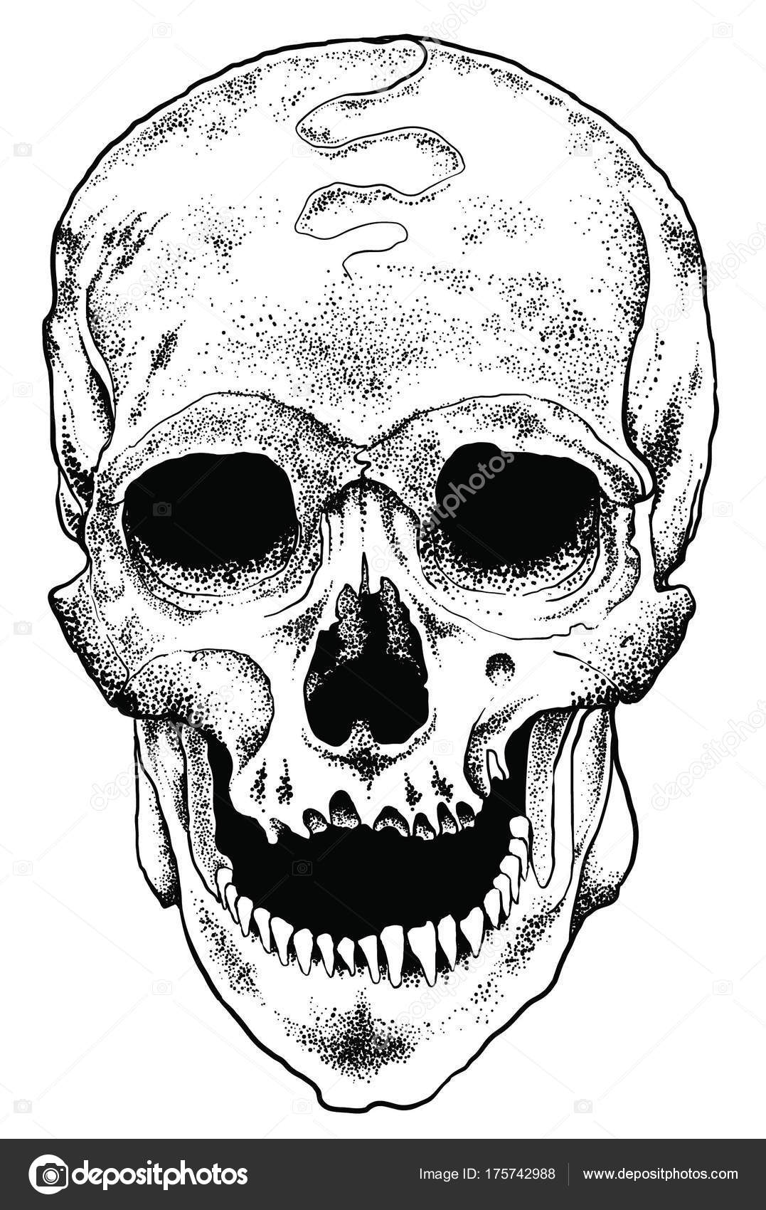 Ilustración Bolsa Anatómica Cráneo Vector — Vector de stock ...