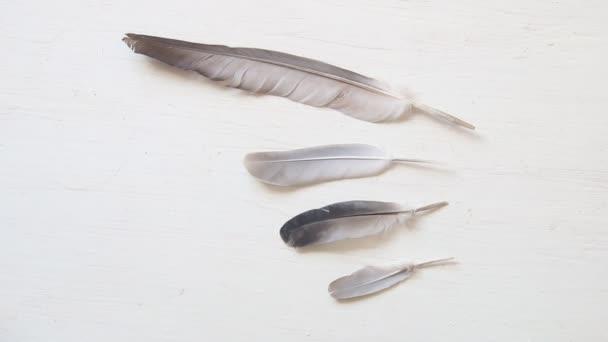 szárny ötlet, galamb tollak