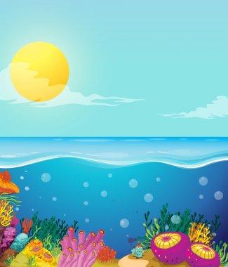 Scene of ocean and underwater
