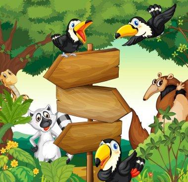 Wild animals around the wooden sign in woods
