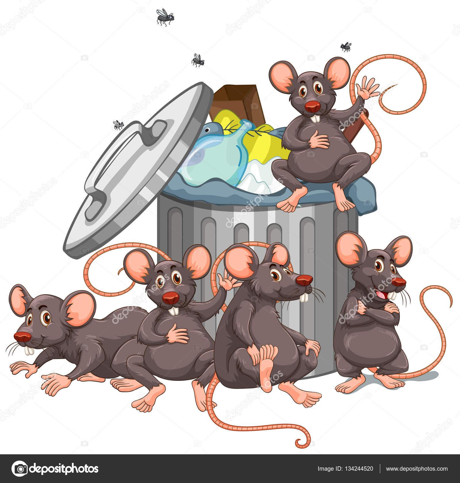 """Résultat de recherche d'images pour """"rats + poubelle"""""""
