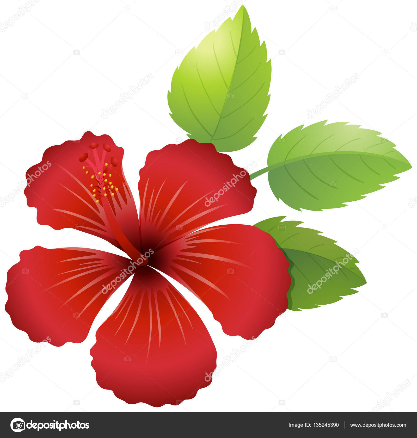 Hibiscus flower in red color — Stock Vector © interactimages #135245390