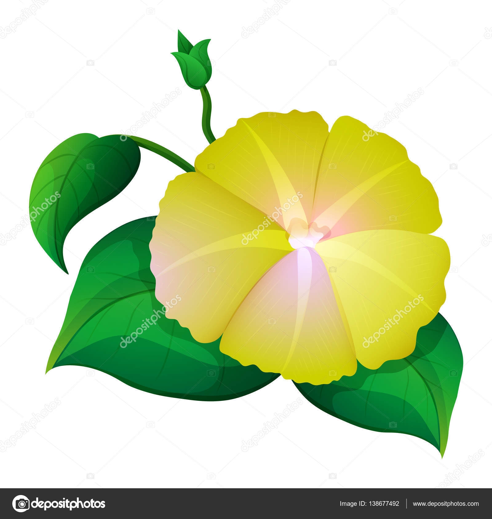 Yellow morning glory flower on white background stock vector yellow morning glory flower on white background stock vector mightylinksfo