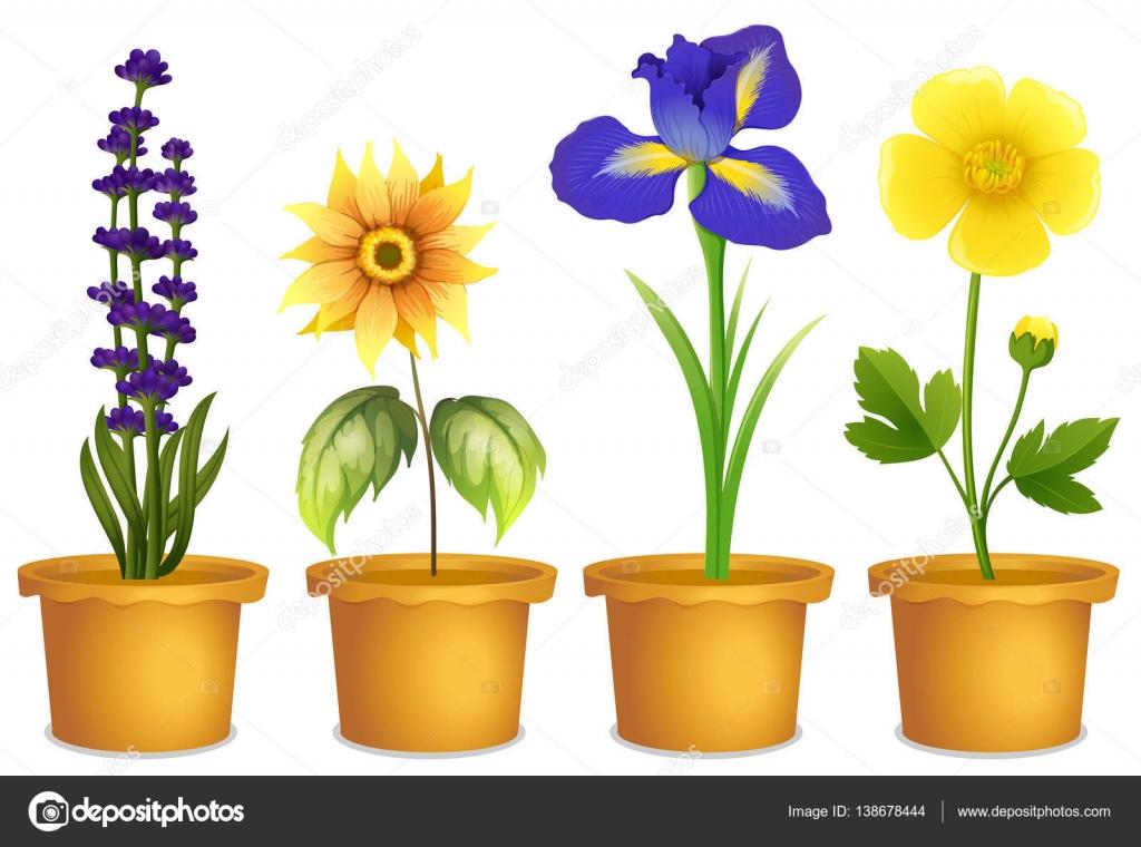 diff rents types de fleurs en pots image vectorielle interactimages 138678444. Black Bedroom Furniture Sets. Home Design Ideas