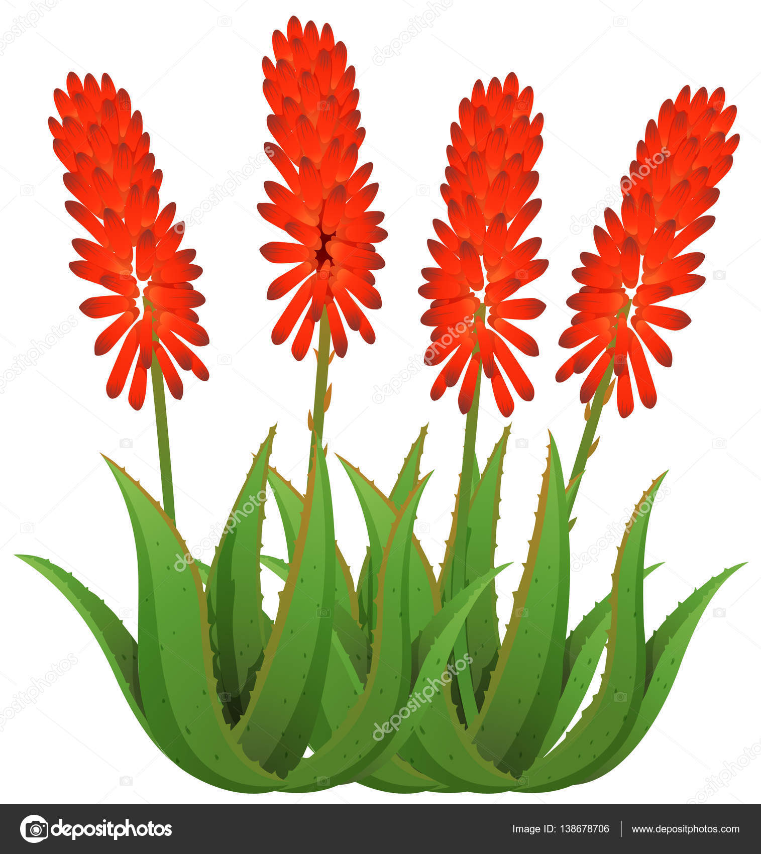 Aloe vera flowers in red color — Stock Vector © interactimages ...