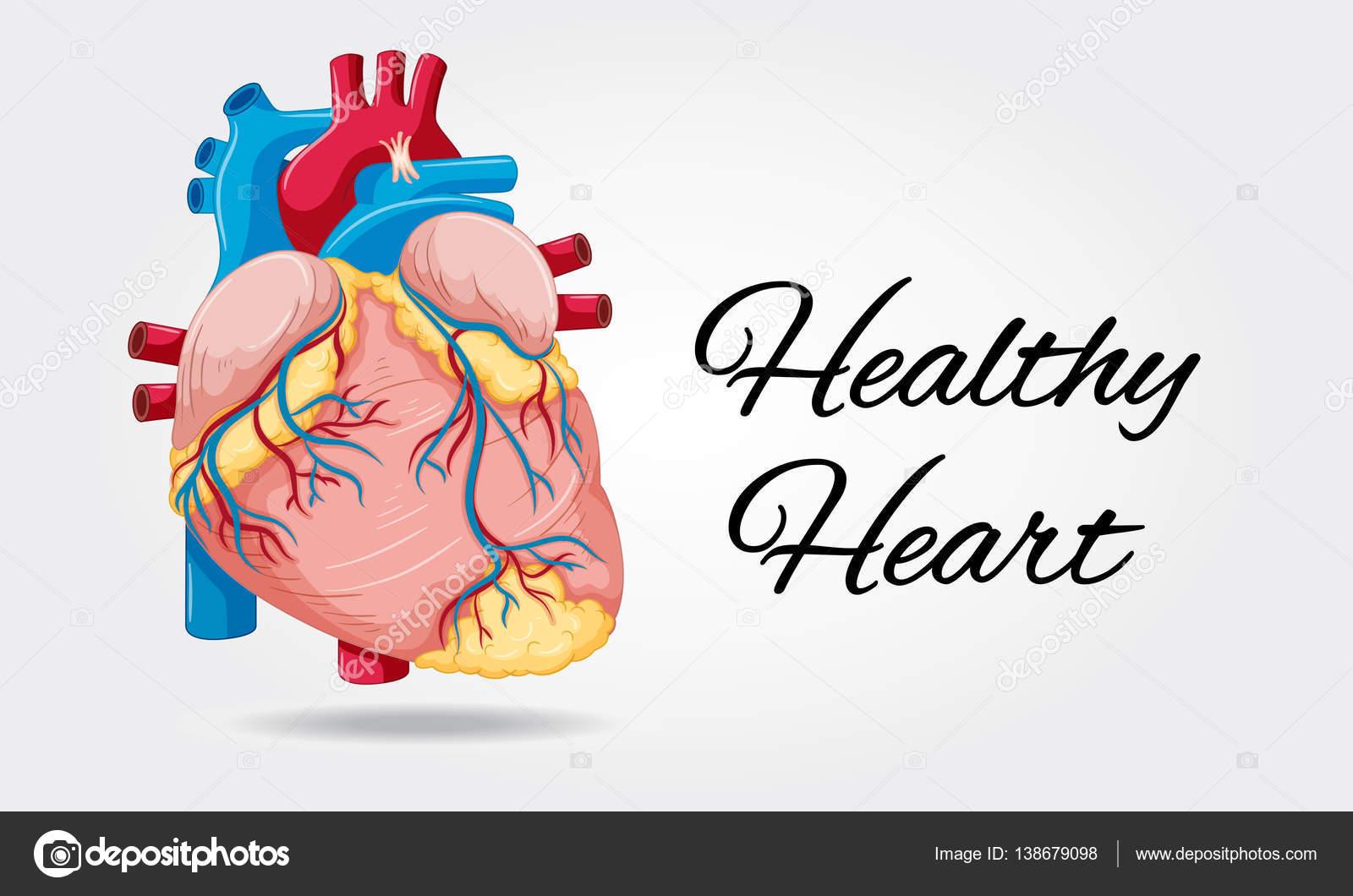 Diagrama del corazón sano en fondo blanco — Vector de stock ...