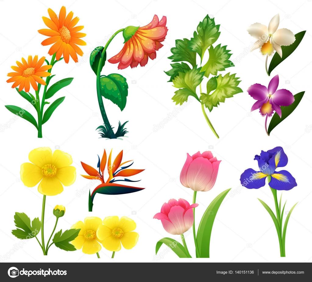 Interactimages 140151136 - Tipos de flores silvestres ...