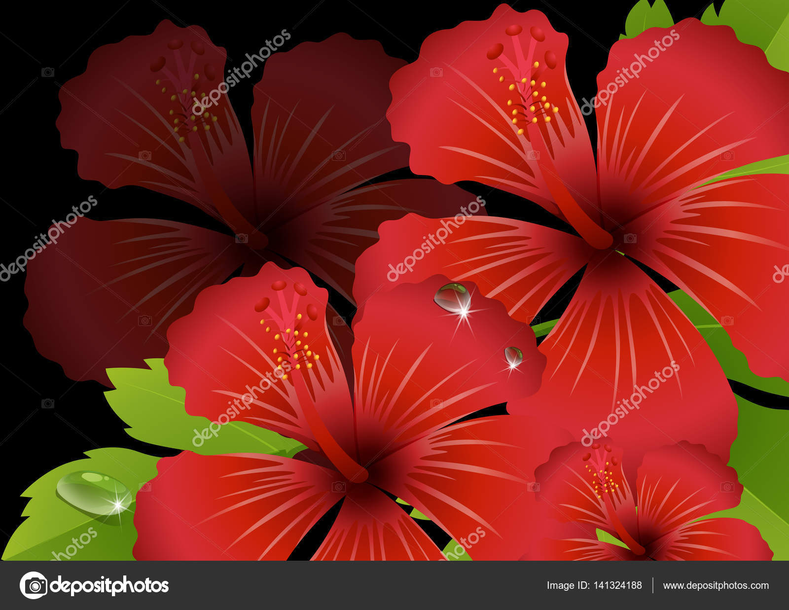 Red hibiscus flowers with black background stock vector red hibiscus flowers with black background stock vector izmirmasajfo