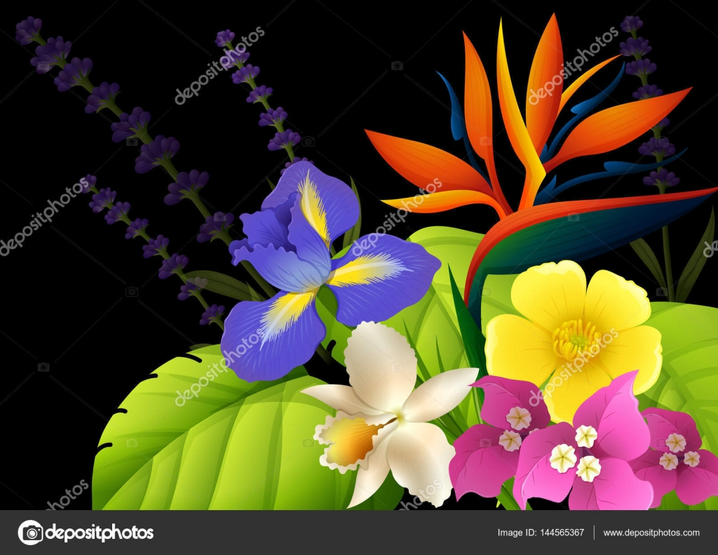 Different types of flowers on black background stock vector different types of flowers on black background illustration vector by interactimages izmirmasajfo
