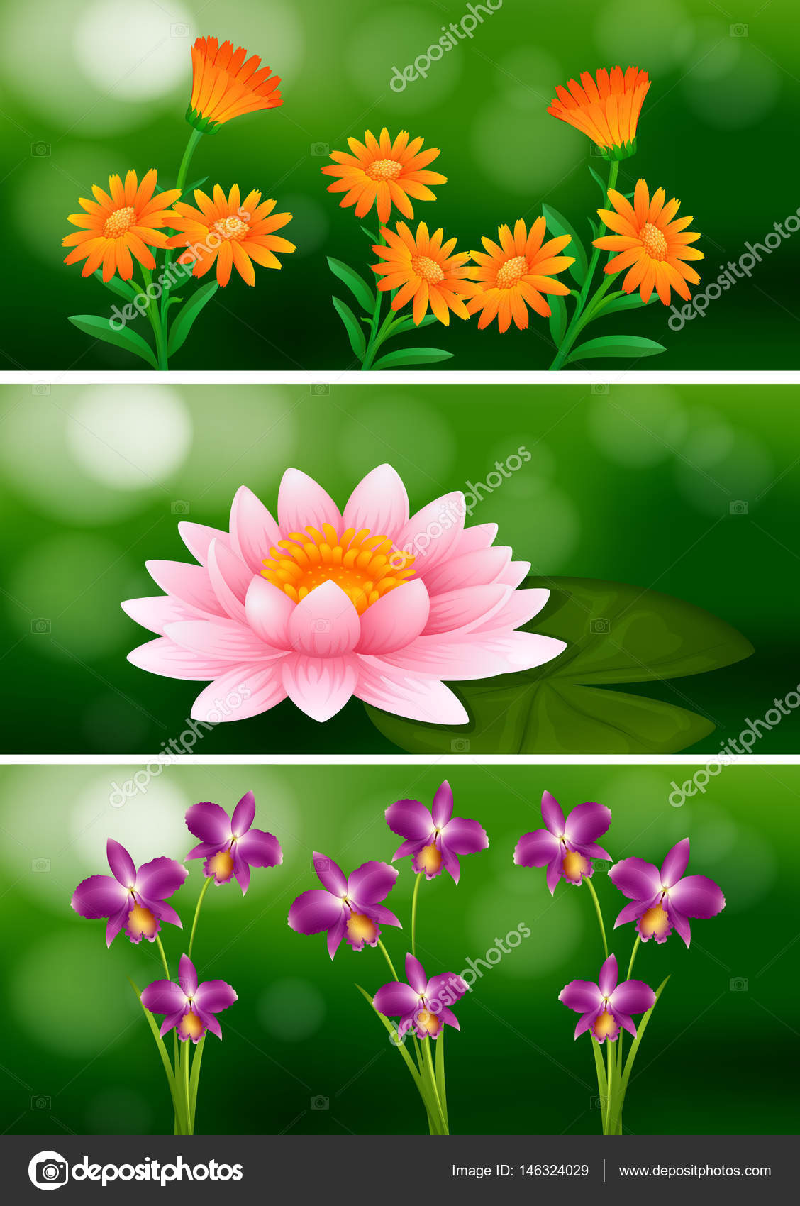 Background design with different types of flowers stock vector background design with different types of flowers illustration vector by interactimages mightylinksfo