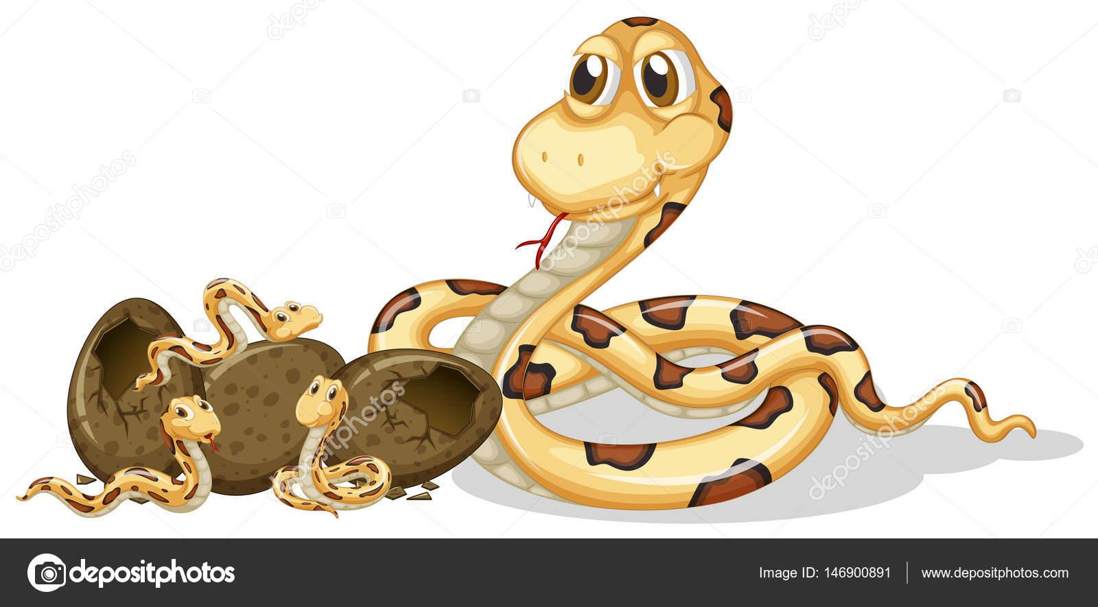 Serpientes de cascabel huevos para incubar — Vector de stock ...