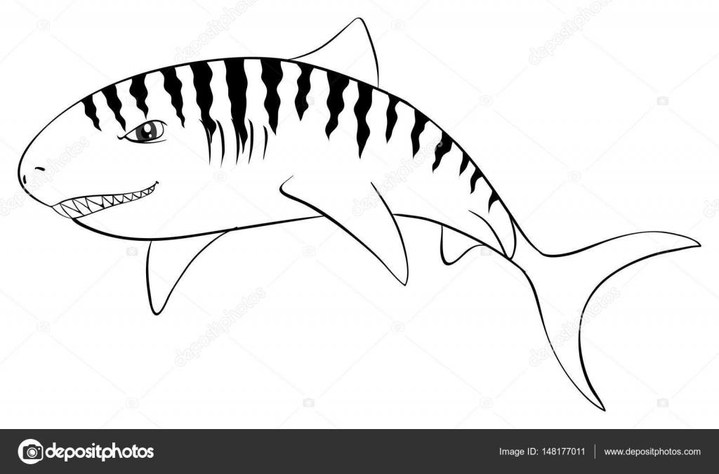 Dibujos: tiburon tigre para colorear | Animal de redacción para el ...