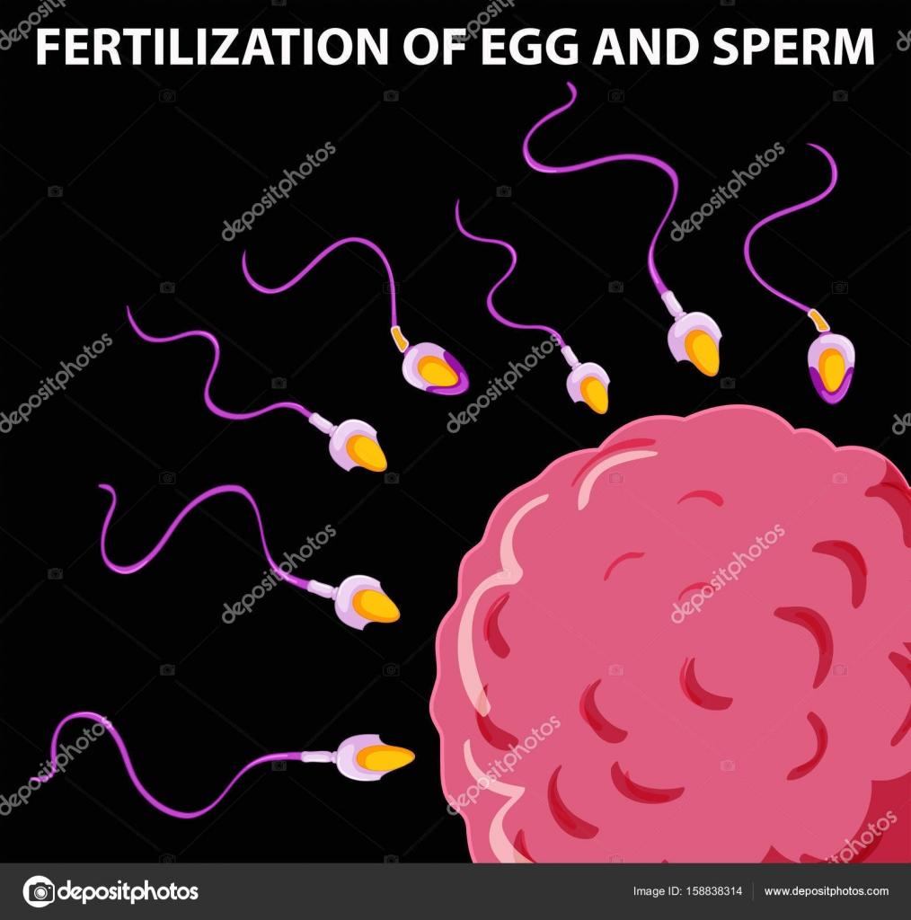 se nota la fecundacion del ovulo
