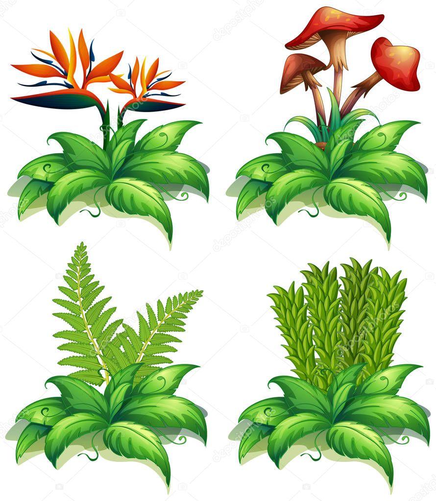Quattro diversi tipi di piante su priorit bassa bianca vettoriali stock interactimages - Diversi tipi di figa ...
