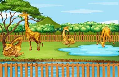 "Картина, постер, плакат, фотообои ""сцена со многими жирафами в зоопарке картины"", артикул 317110154"