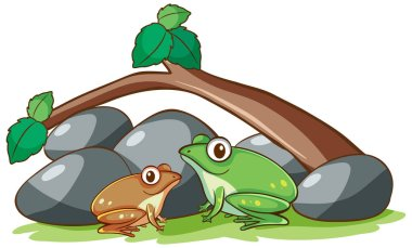 Isolated picture of two frogs in garden
