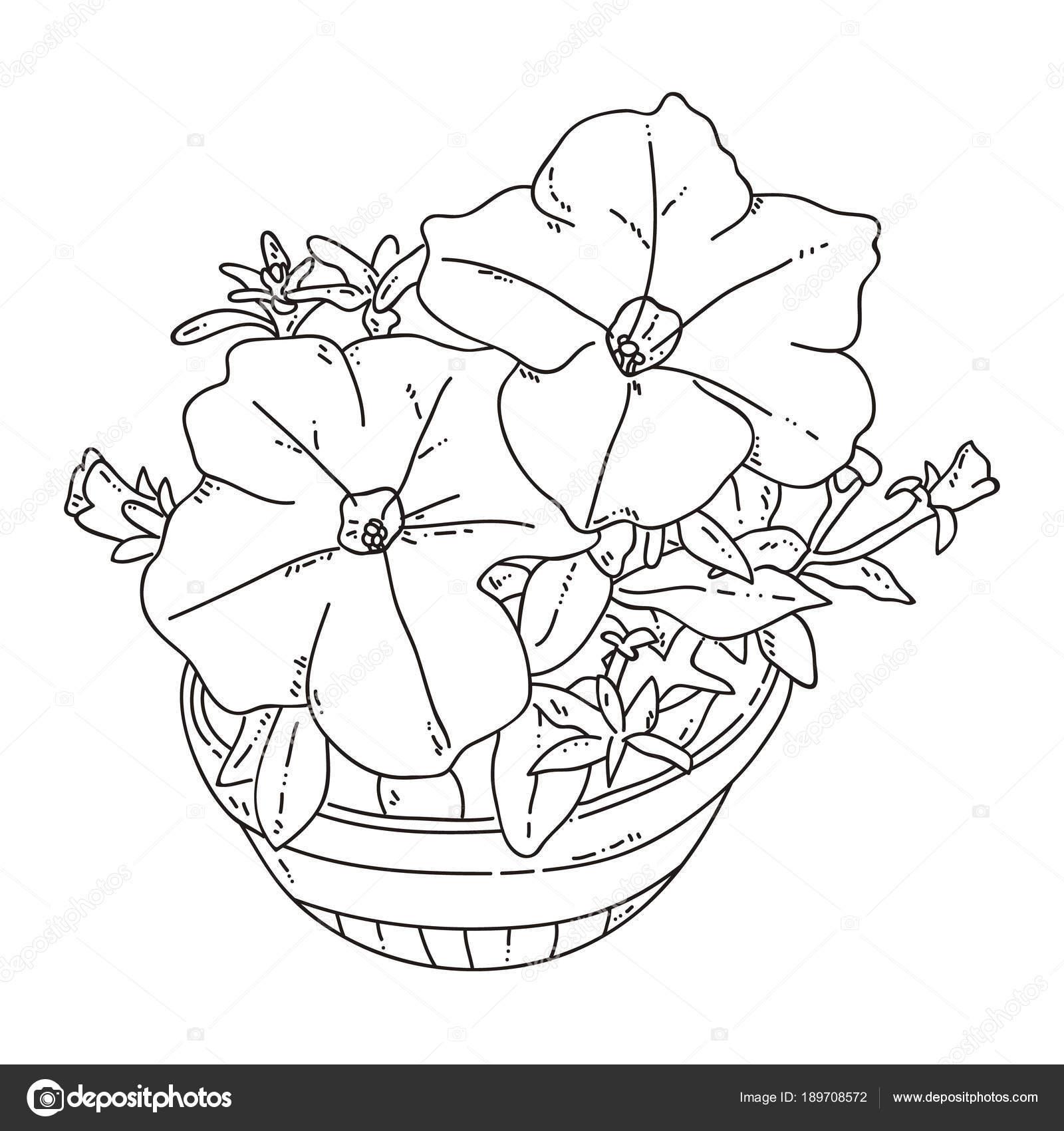 Fotos Rosas Para Calcar Ilustración Vector Página Con