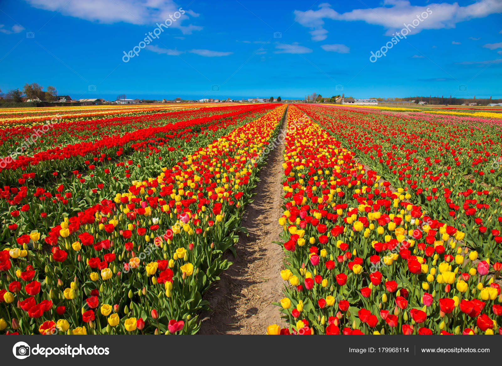 Πες μας τα όλα με μια φωτό... - Σελίδα 5 Depositphotos_179968114-stock-photo-spring-blooming-tulip-field-spring