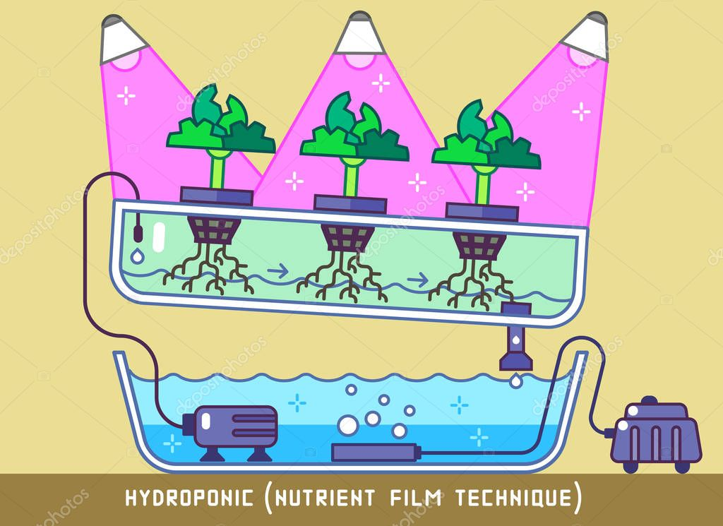 Hydroponic Nutrient Film Technique