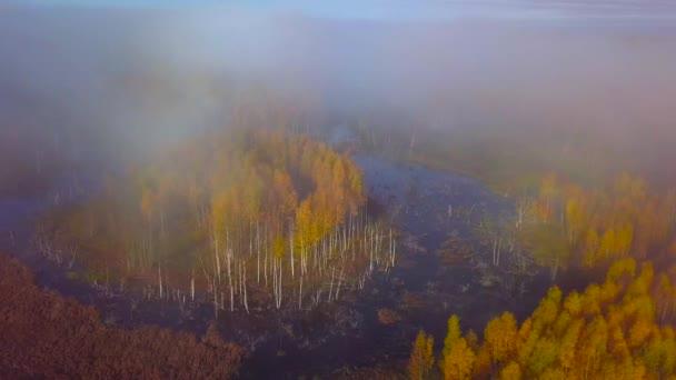 Vastag ködön át repül a mocsárba.