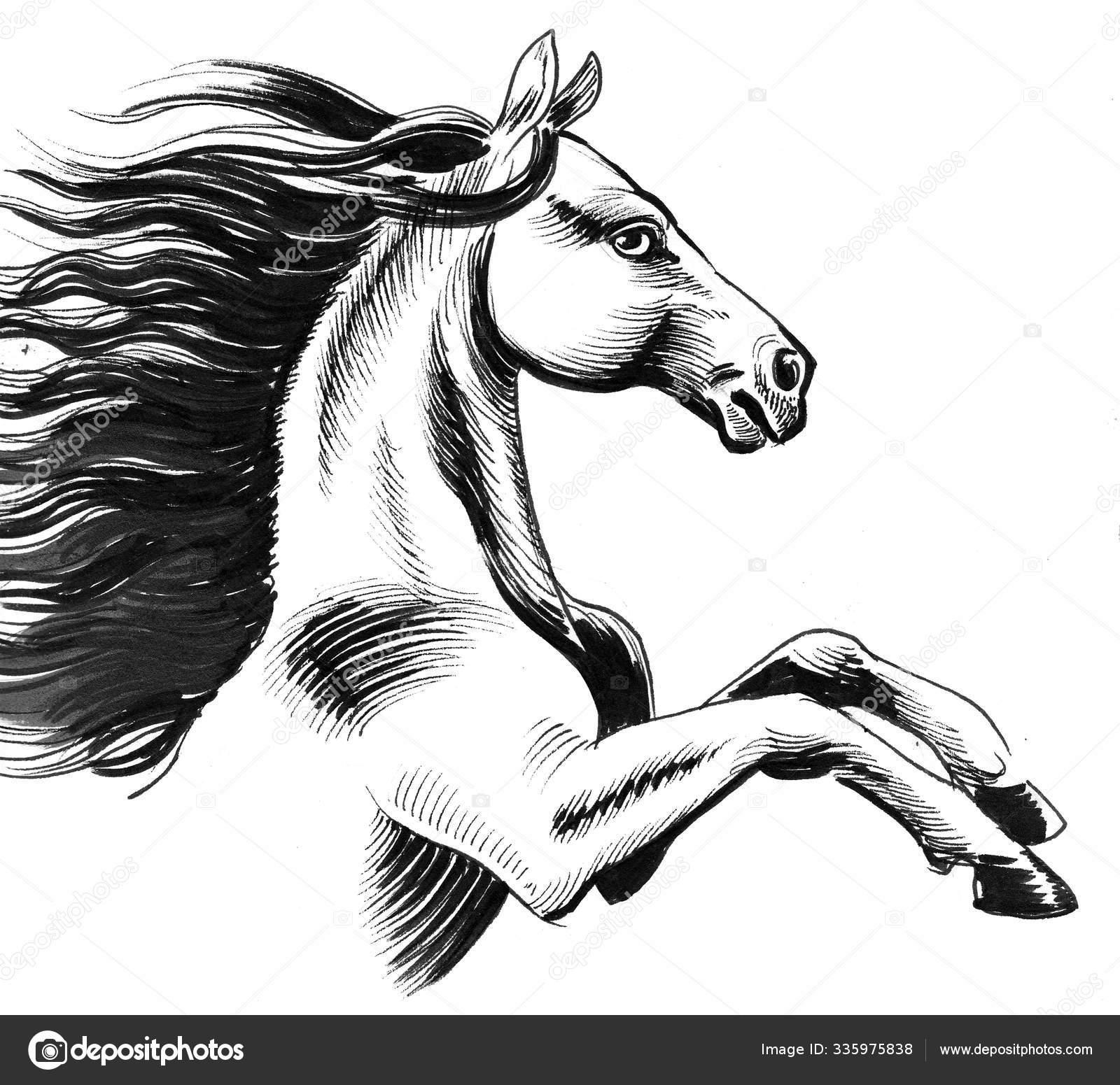 Wild Horse Ink Black White Drawing Stock Photo C Alexblacksea 335975838