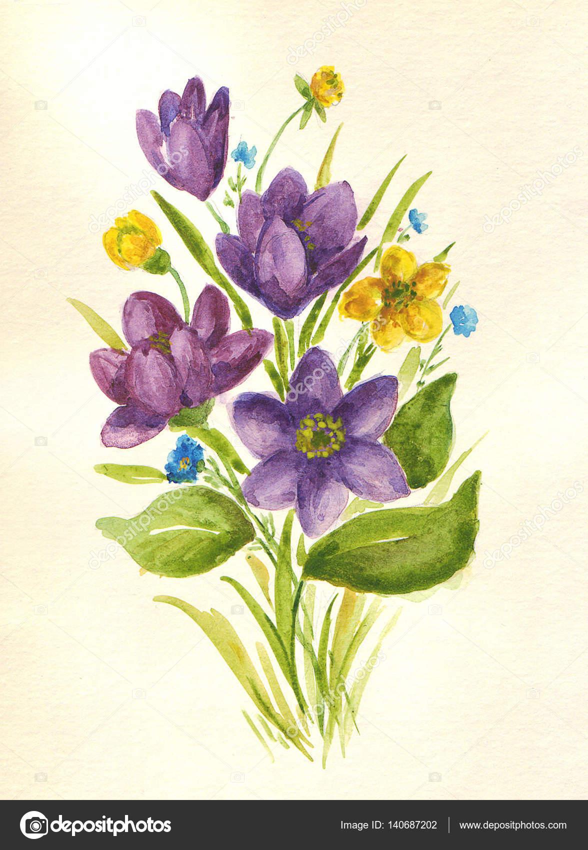 Полевые цветы рисунки акварелью