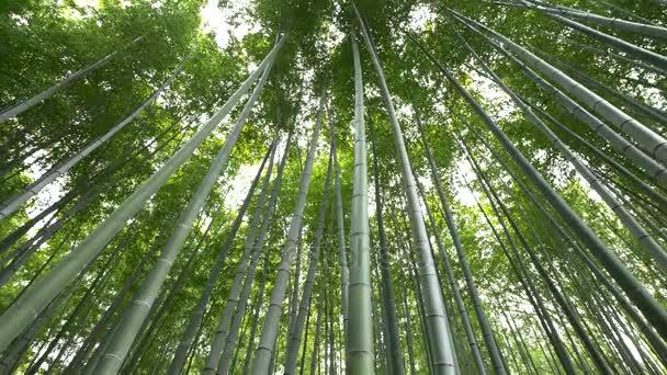 Nízký úhel pohledu z bambusových lesů, Arashiyama, Kjóto, Japonsko