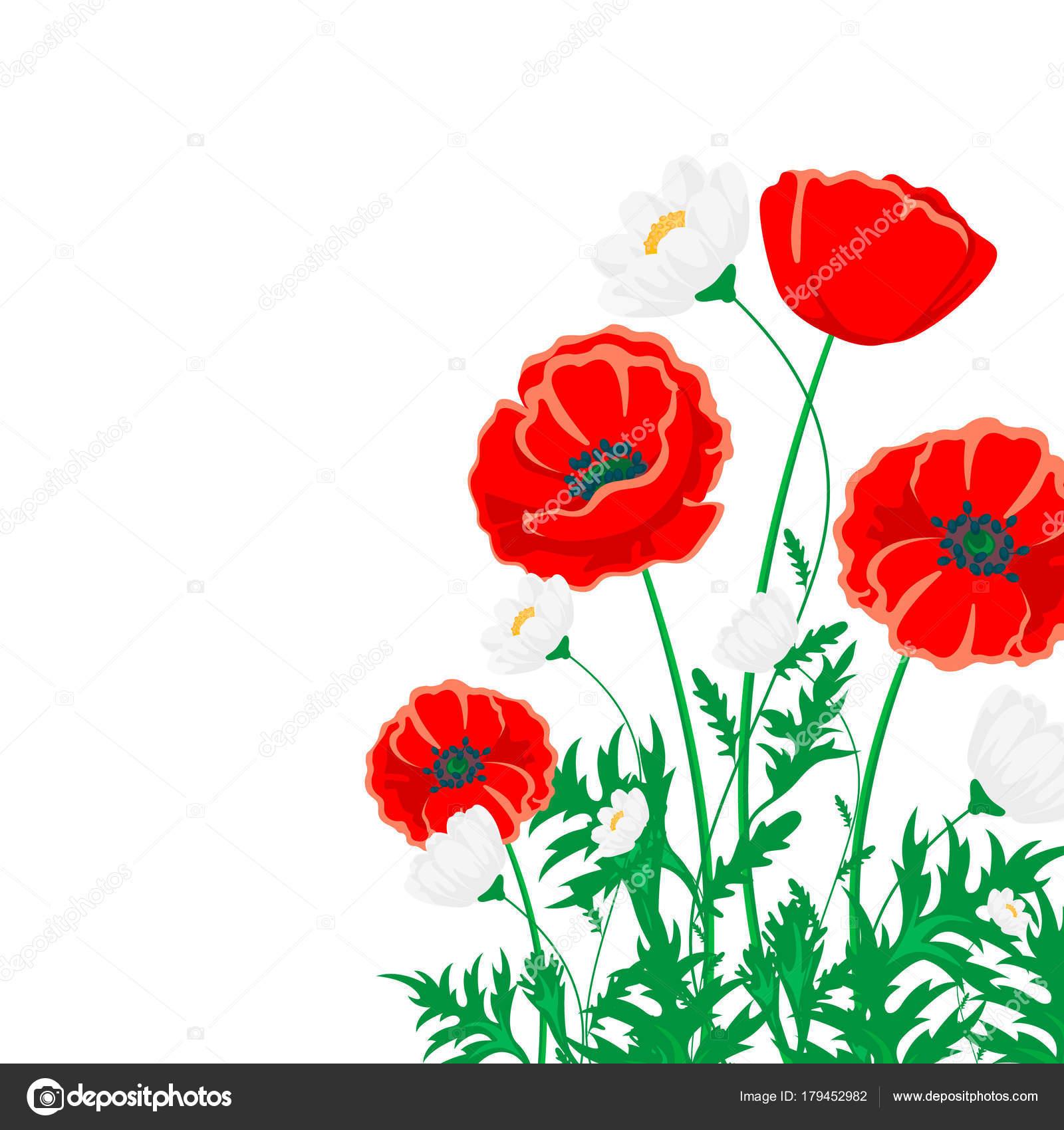 Red Poppy White Chamomile Illustration Vector Flower White Green