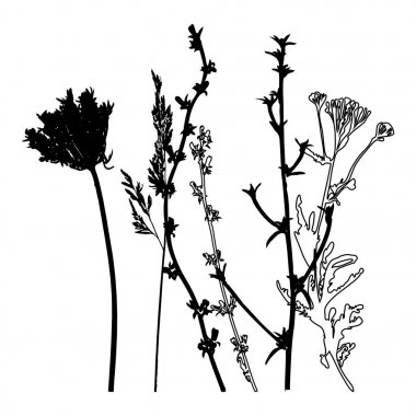 Vector illustration of wild flowers, herbs and grasses.Thin delicate lines silhouettes of different plants - chicory, yarrow, dill, queen anne lace