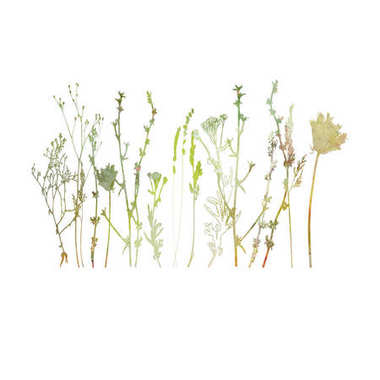 Vector illustration of wild flowers, herbs and grasses.Thin delicate lines silhouettes of different plants - chicory, yarrow, dill, queen anne lace.