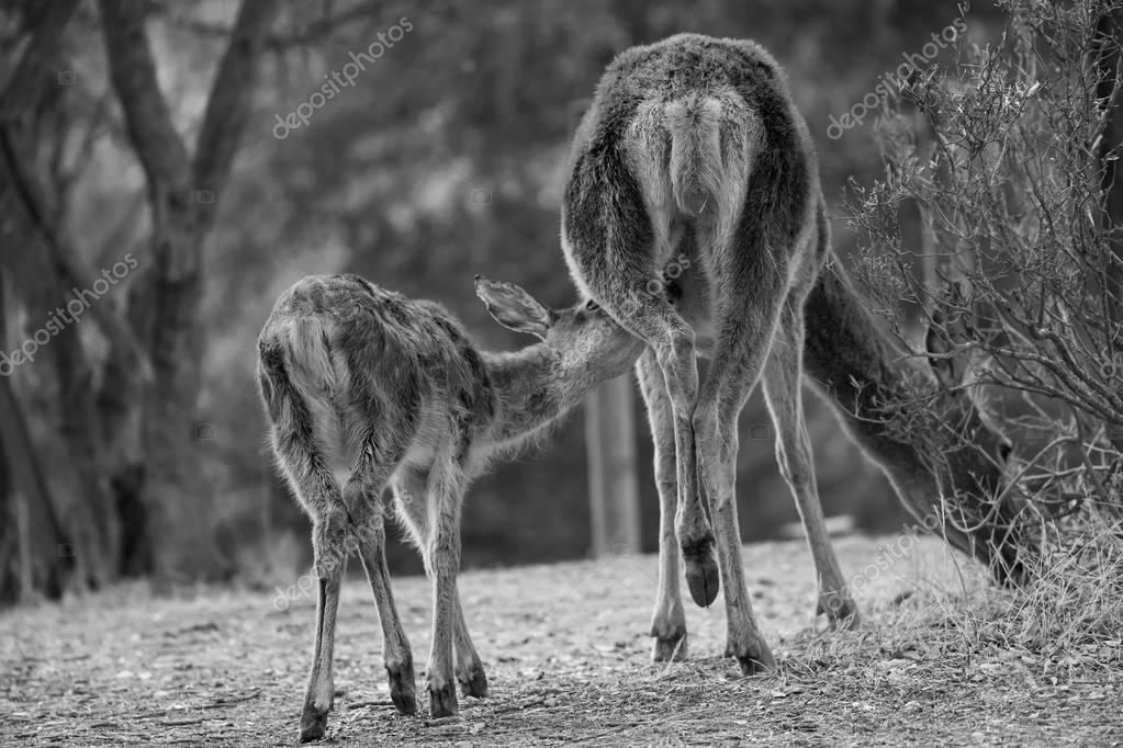 Mamando de la madre