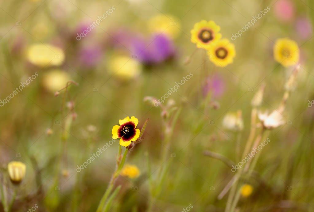 Las flores en primavera
