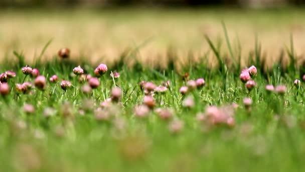 Fields of flowers and butterflies