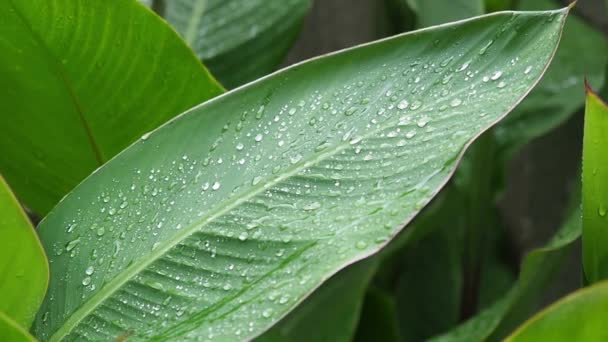 die großen grünen Blätter Nahaufnahme kleine Wellen auf einem Wind.