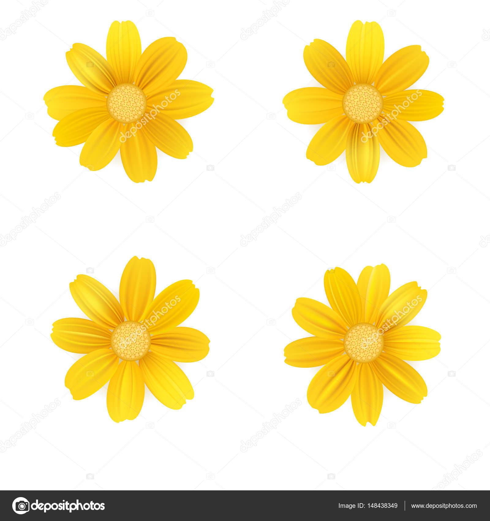 Satz von isolierten gelben gerbera oder gänseblümchen vektor bunte blumen auf weißem hintergrund vorlage