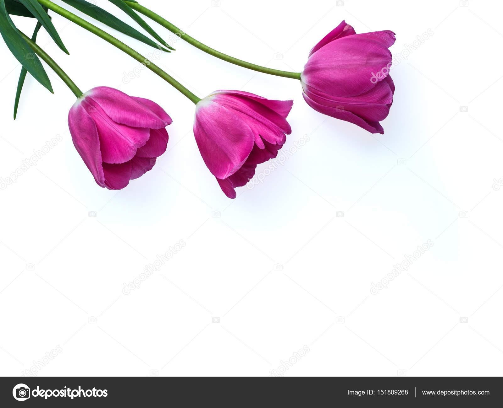 tulipe fete des meres