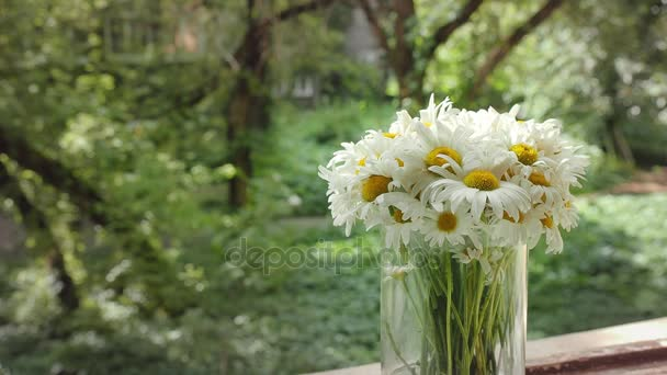 Camomile animation in the cinemagraph technics. White flowers in glass vase in a summer day on the background of the old Park. Cinema graph HD footage, close-up