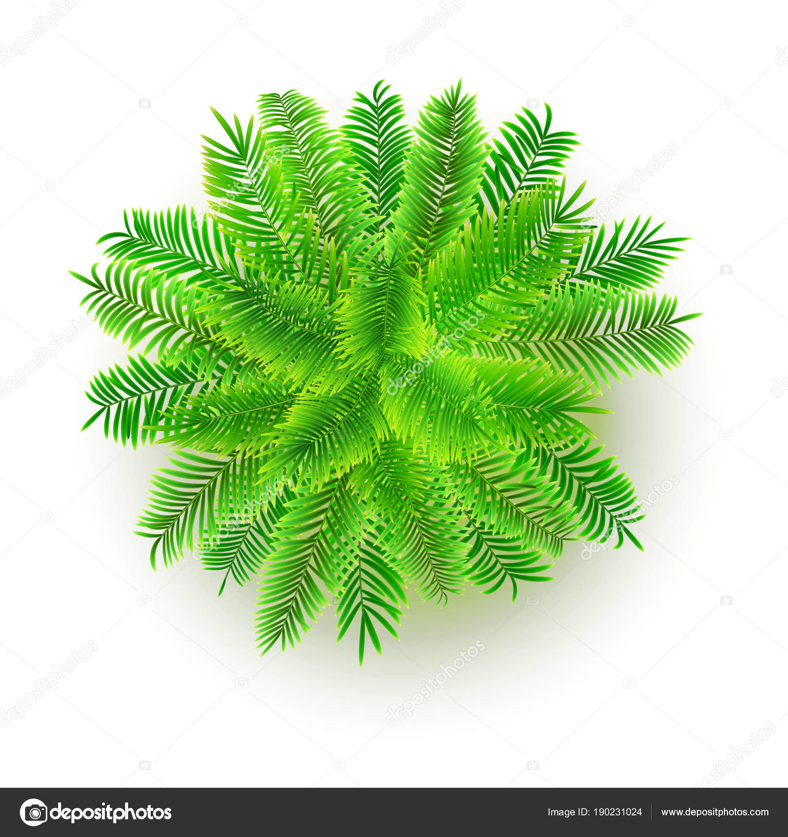 Green palm tree, vector 3D illustration isolated on white