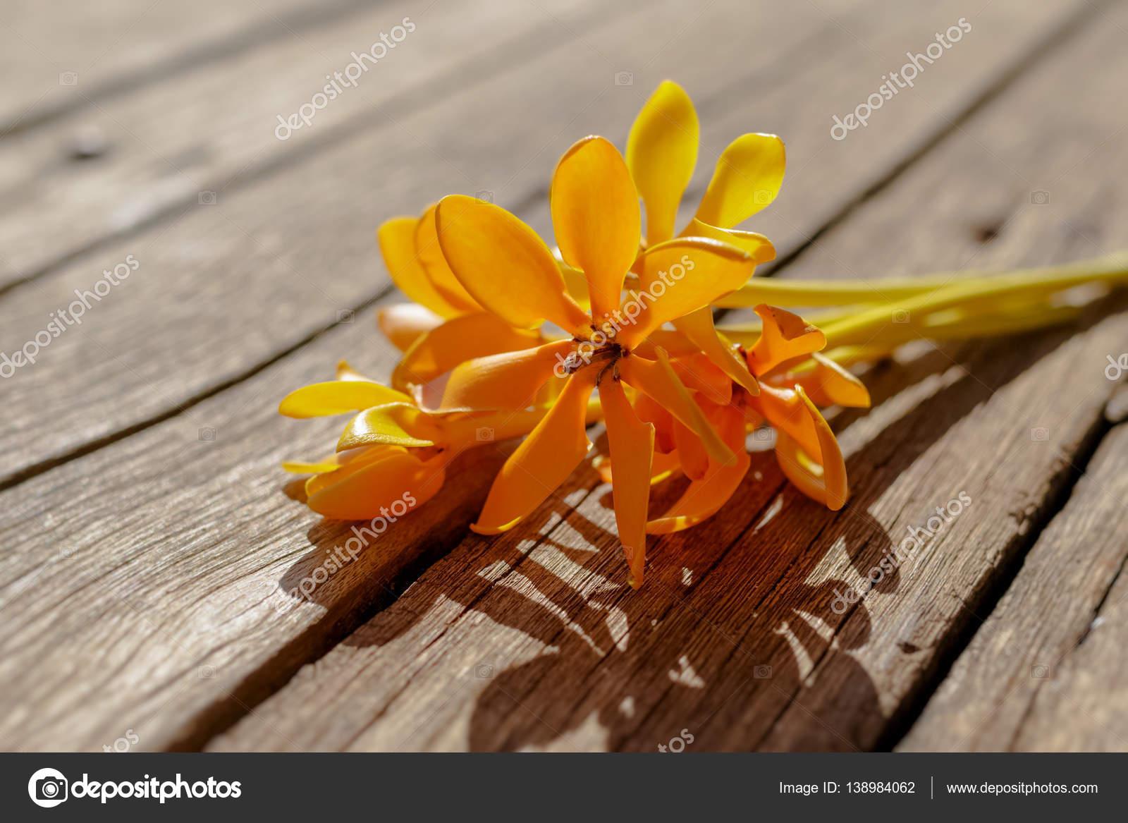 Yellow Gardenia Flower Gardenia Carinata Wallich On Wooden Des