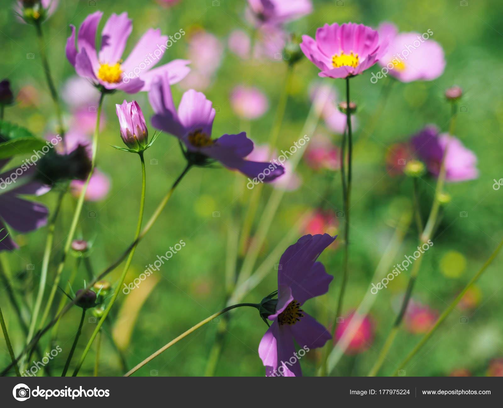 Beautiful Wildflowers Wonderful Sunny Day Abandoned Wild Field