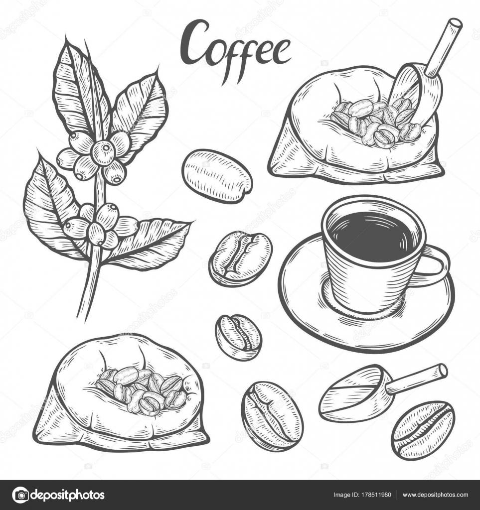 Imágenes Rama De Cafe Para Colorear Rama De La Planta Del