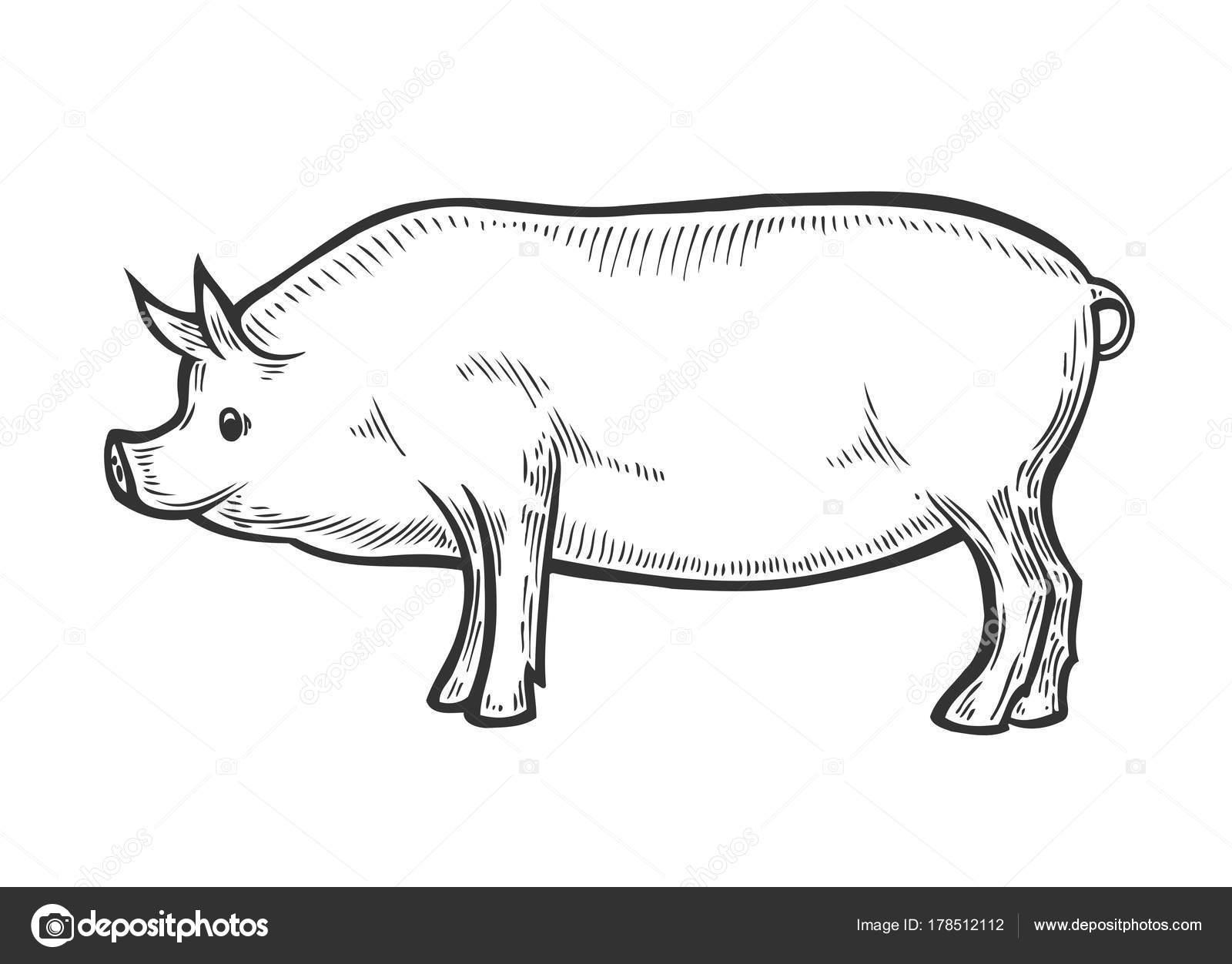 Tierische Nutztieren Schwein — Stockvektor © larysarty.gmail.com ...