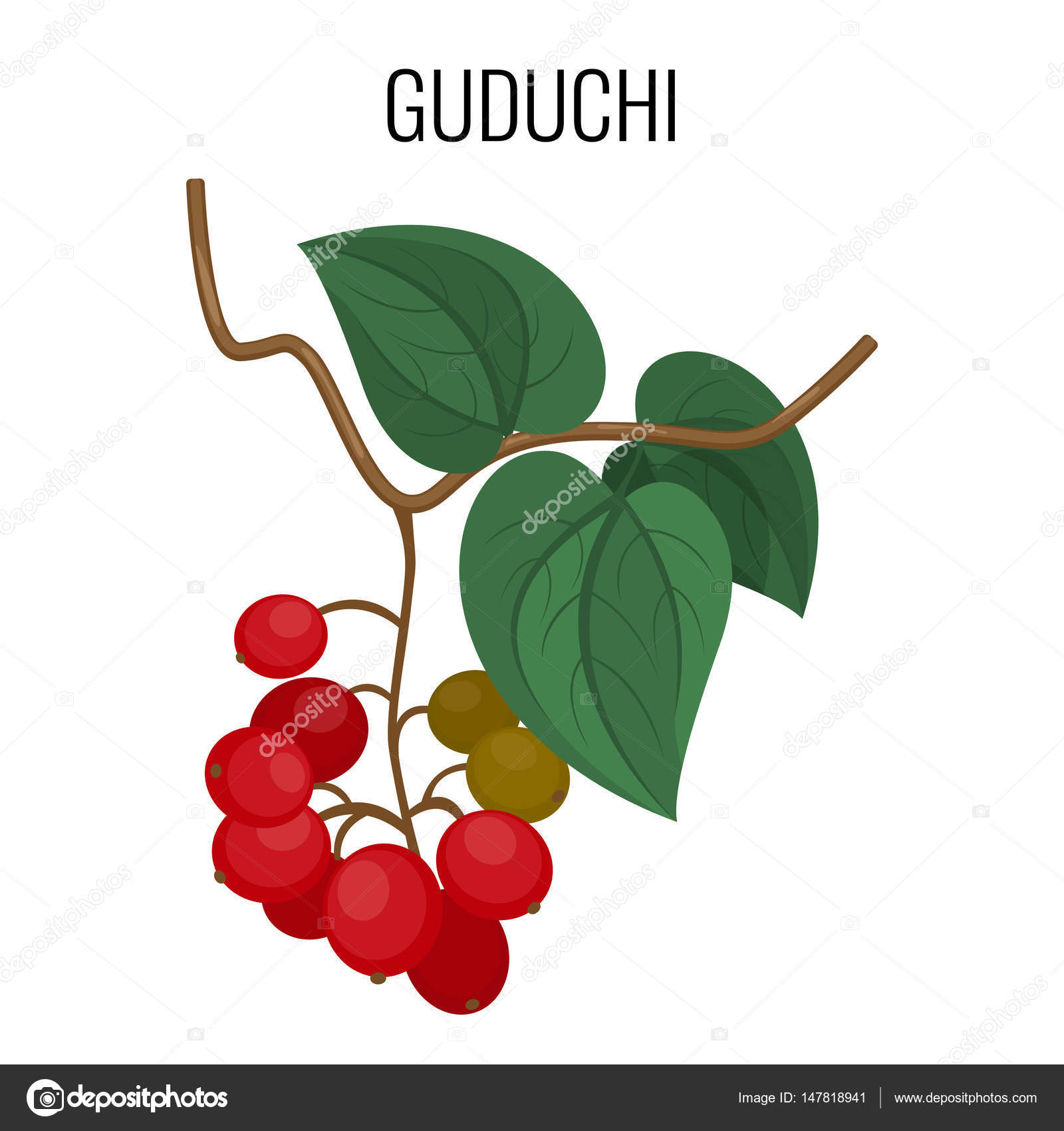 Guduchi Branch With Red Berries And Leaves Isolated On White