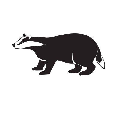Badger on short legs isolated on white background.
