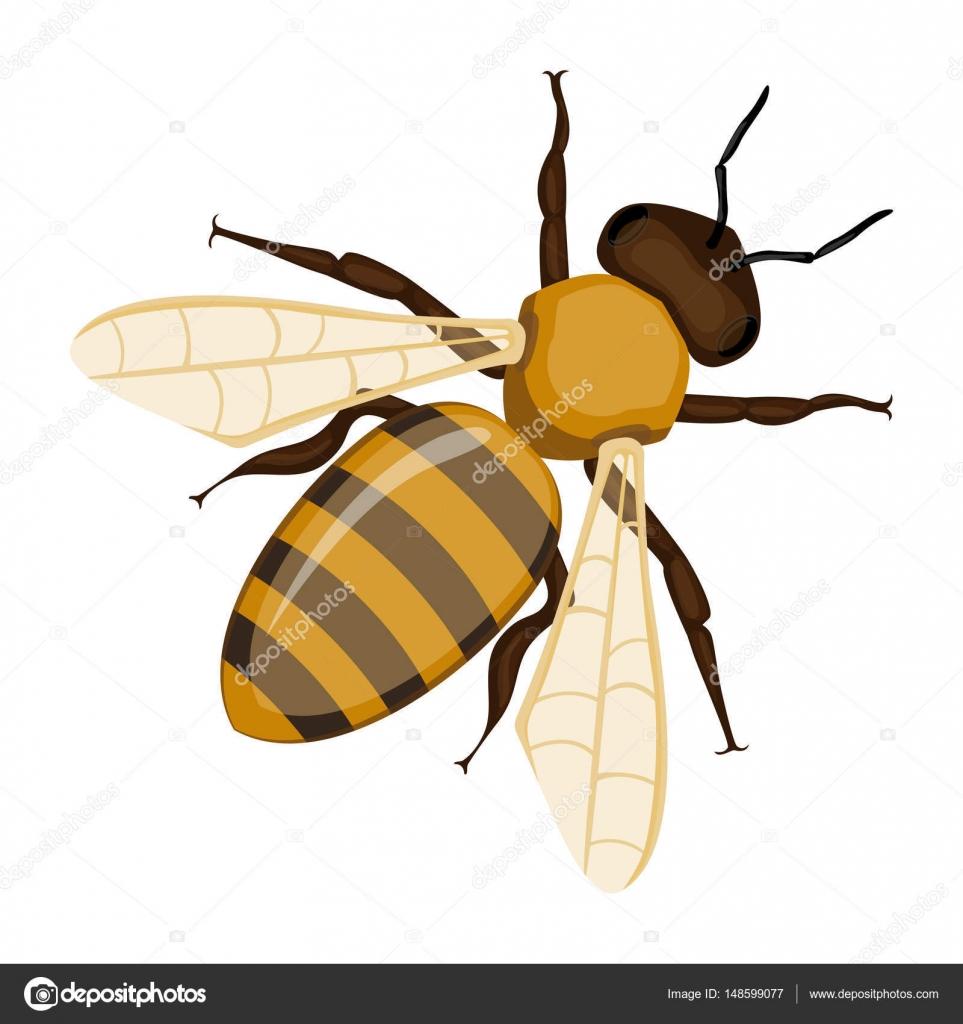 Dibujo abeja realista | Patrón dibujado de realistas miel abeja mano ...